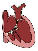 Cardiology Diagram