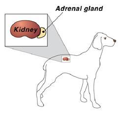 Endocrinology Illustration
